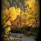 Autumn light by Neutro