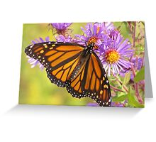Monarch on Asters Greeting Card