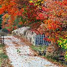 Autumn Country Lane by Kenneth Keifer