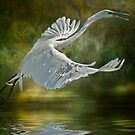 Everglades Egret by Tarrby