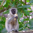 Monkey by Heather  Sugg