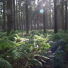 woodland thetford by gwebb