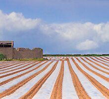 Pin Stripped Fields. by GavinDuxbury