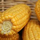 Ever so sweet, corn in a basket. by Barbara  Glover