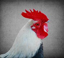 Portrait of a Rooster by Elaine Teague