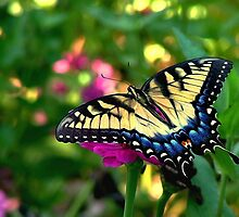 Summer Visitor by Janice Carter