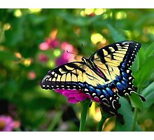 Summer Visitor Photographic Print