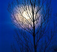 Moon Tree by Greg Summers