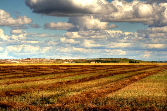 After the Harvest by Larry Trupp