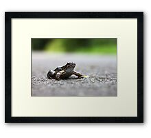 Frog in the Road Framed Print