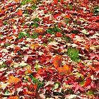fallen leaves by Daneal O'Leary
