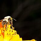 Bee and Pollen by vasu