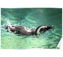 Swimming Along Poster