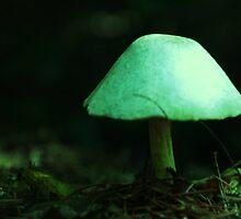 Lampshade Mushroom by Matthew Bonafe