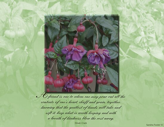 Quote on fuschia image with overlay. by Sandra Foster