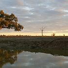 Late afternoon by Lachlan Kent