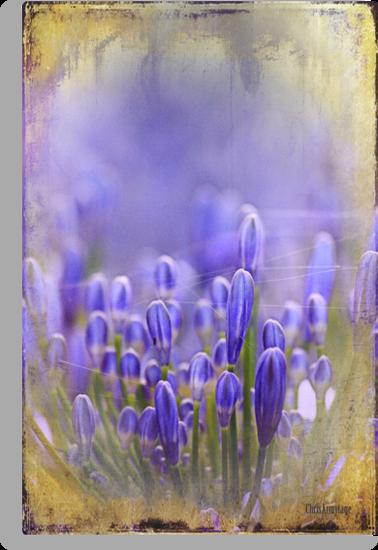 Feelin' Blue by Chris Armytage™