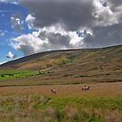 Bowland Views by John Hare