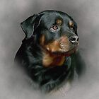 Rottweiler Dog by Sarahbob