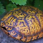 Box Turtle by Linda Costello Hinchey