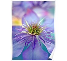Clematis Rainbow Flower Photography Poster
