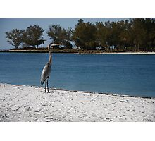 Bird on the Beach - Beer Can Island - Longboat Key Photographic Print