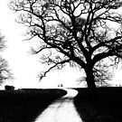 Tree along footpath by Paul Richards