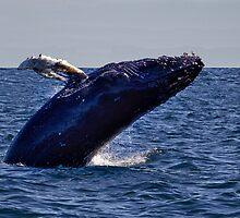 Whale Watching by Kathy Weaver