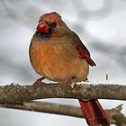 Female Cardinal by Bine