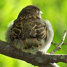Fledgling by Bine