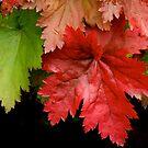 Autumn Riches by Gina Ruttle  (Whalegeek)