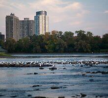Island of Seagulls by haominli