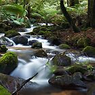 Mossy Cascade by Sean Farrow