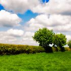 Trees and clouds by Paul Richards