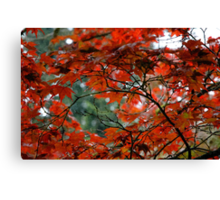 Red Leaves on a Fall Morning Canvas Print