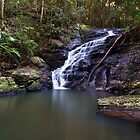Kondalilla Falls by Shelley Warbrooke