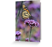 Monarch on Mauve Greeting Card