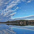 Fall Autumn Trees, Clouds & Blue Sky Reflecting on Lake w/ Gull Flying over Water by Chantal PhotoPix