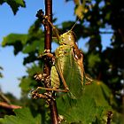 Green Locust by Irina777
