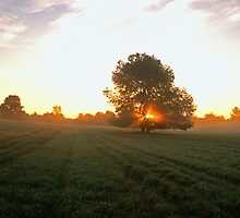 Mowed Field at Dawn by Bill Spengler