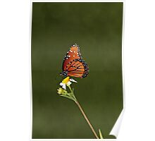 MILKWEED BUTTERFLY CLOSEUP Poster