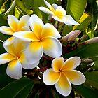 Flowers by Sandra Chung