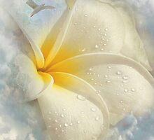 Dreamer by Brenda Boisvert