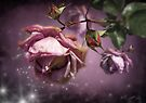 Dusky Pink Roses by Svetlana Sewell