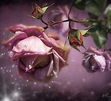 Dusky Pink Roses by Svetlana Sewell