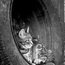 Lazy Days by Nicki Baker