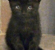 Black Kitten by Sue Nichol