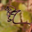 Curly Grape Vines by Renee D. Miranda