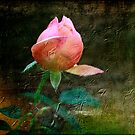 Daze of Wine and Roses by Brenda Burnett