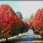Autumn Lane by Kathy Bucari